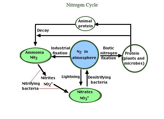 what is the importance of nitrogen cycle